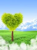 Albero di forma del cuore immagini stock libere da diritti