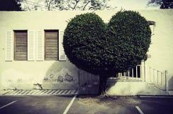 Albero di forma del cuore Fotografia Stock