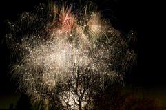 Albero di fuoco Fotografie Stock Libere da Diritti