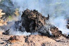 albero di fuoco senza fiamma del ceppo fotografie stock libere da diritti