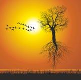 Albero di gelso di volo Fotografia Stock Libera da Diritti