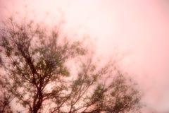 Albero di gelso nella nebbia Fotografie Stock