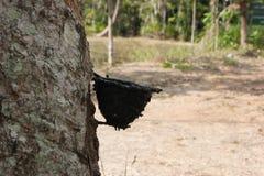 Albero di gomma alla Tailandia del sud Fotografie Stock Libere da Diritti