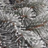 Albero di inverni Fotografia Stock
