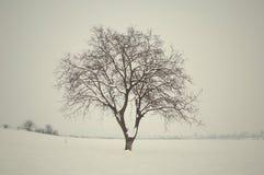 Albero di inverno Fotografie Stock Libere da Diritti