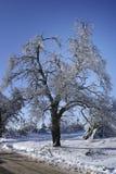 Albero di inverno. Fotografia Stock