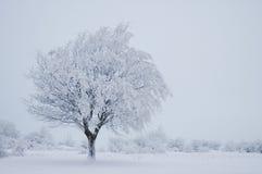 Albero di inverno Immagine Stock Libera da Diritti
