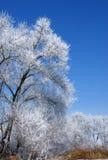 Albero di inverno. Fotografie Stock Libere da Diritti
