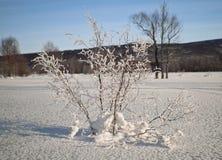 Albero di inverno fotografia stock libera da diritti