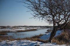 Albero di inverno Fotografie Stock