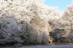 Albero di inverno Immagini Stock Libere da Diritti
