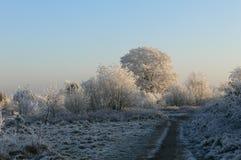 Albero di inverno Immagini Stock