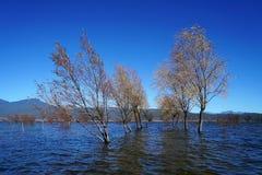 Albero di inverno che sta nel lago Fotografia Stock