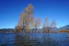 Albero di inverno che sta nel lago Fotografie Stock