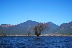 Albero di inverno che sta nel lago Immagine Stock