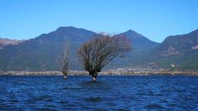 Albero di inverno che sta nel lago Immagine Stock Libera da Diritti