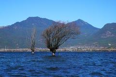 Albero di inverno che sta nel lago Fotografia Stock Libera da Diritti
