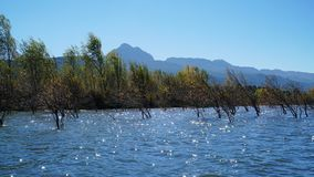 Albero di inverno che sta nel lago Fotografie Stock Libere da Diritti