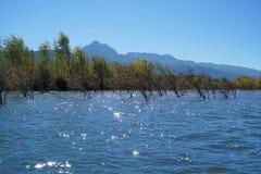 Albero di inverno che sta nel lago Immagini Stock Libere da Diritti