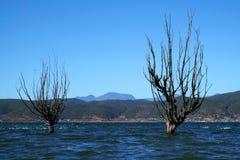 Albero di inverno che sta nel lago Immagini Stock