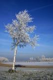 Albero di inverno con cielo blu Immagini Stock Libere da Diritti