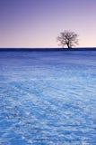 Albero di inverno con l'albero Fotografia Stock
