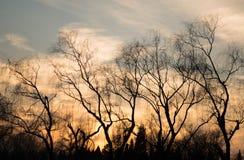 Albero di inverno della siluetta con il tramonto Immagine Stock
