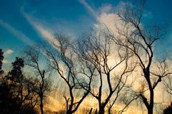 Albero di inverno della siluetta con il tramonto 2 Fotografia Stock