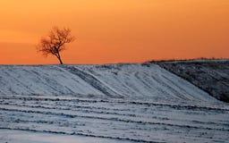 Albero di inverno di tramonto Fotografia Stock