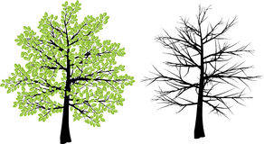 Albero di inverno e della primavera Fotografia Stock