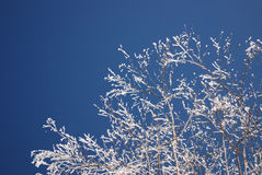 Albero di inverno in giorno pieno di sole freddo Immagini Stock Libere da Diritti