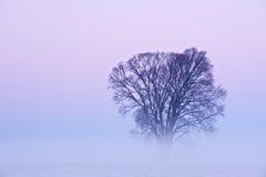Albero di inverno in nebbia fotografie stock