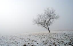 Albero di inverno in nebbia Immagine Stock Libera da Diritti