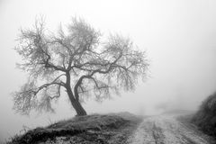 Albero di inverno in nebbia Immagini Stock Libere da Diritti