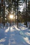 Albero di inverno sotto cielo blu 6 Immagine Stock Libera da Diritti