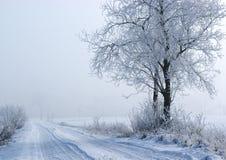 Albero di inverno vicino alla strada Fotografia Stock Libera da Diritti