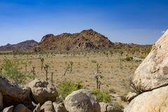Albero di Joshua con le rocce nel parco nazionale dell'albero di Joshua Immagine Stock