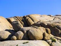 Albero di Joshua con le rocce nel parco nazionale dell'albero di Joshua Immagine Stock Libera da Diritti