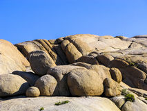 Albero di Joshua con le rocce nel parco nazionale dell'albero di Joshua Fotografia Stock Libera da Diritti