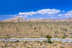 Albero di Joshua con le rocce nel parco nazionale dell'albero di Joshua Immagini Stock Libere da Diritti