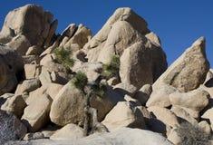 Albero di Joshua da Rocks Fotografia Stock Libera da Diritti