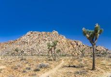 Albero di Joshua e della roccia nel parco nazionale dell'albero di Joshua Immagini Stock Libere da Diritti