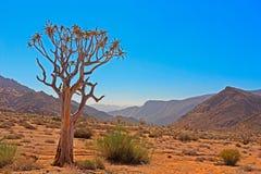 Albero di Kokerboom in valle arida Richtersveld Immagini Stock
