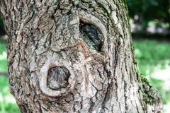 Albero di legno duro con la corteccia strutturata Fondo, natura fotografia stock