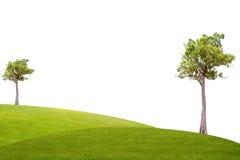 Albero di malayana di Irvingia su erba verde Immagine Stock Libera da Diritti