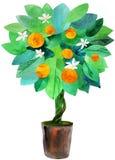 Albero di mandarino in un POT Fotografie Stock