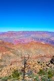 Albero di morte nella priorità alta del paesaggio del Grand Canyon Fotografia Stock