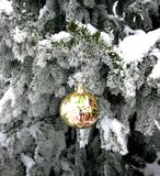 Albero di Natale Fotografia Stock