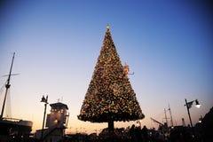 Albero di Natale al crepuscolo Fotografie Stock