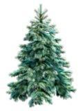 Albero di Natale blu con il percorso di residuo della potatura meccanica Fotografia Stock